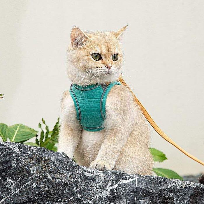 Per la sicurezza del tuo gattino image